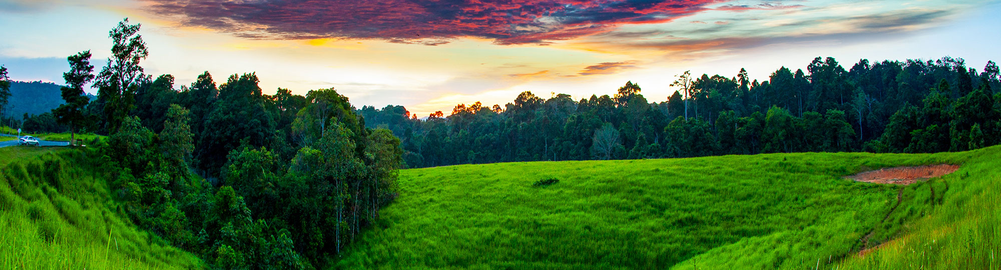 Beautiful Field with Green Grass